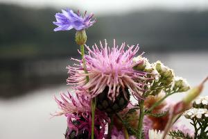 Kwiatki nad jeziorem